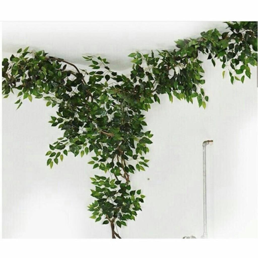 Cành lá xanh làm cây giả decor – cành si giả trang trí – Lizflower