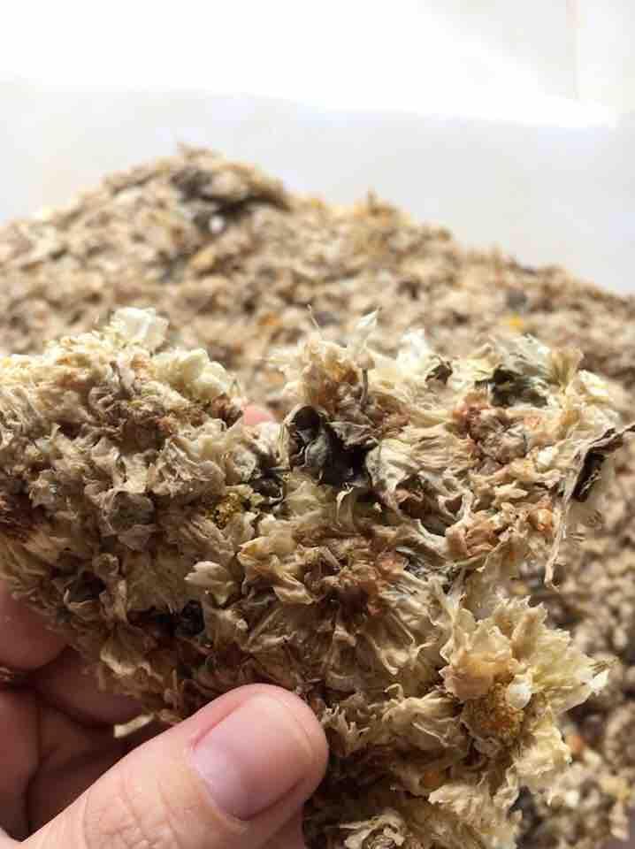 Hoa cúc sấy khô 100g - cúc trắng loại 1