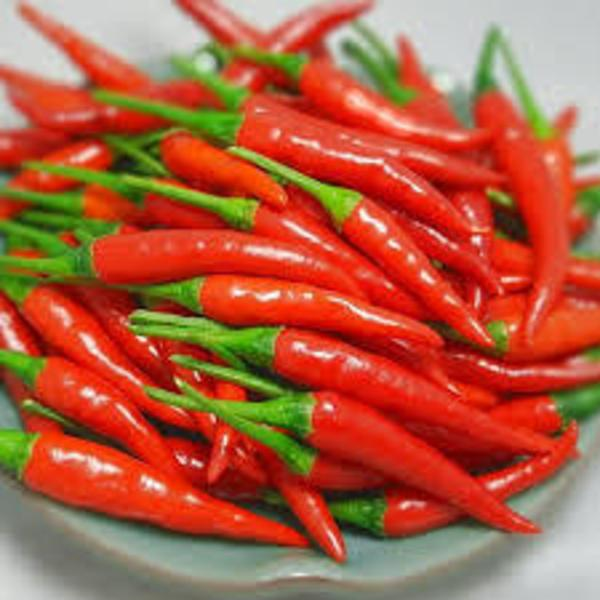 hot chili pepper with HIGH QUALITY and COMPETITIVE PRICE
