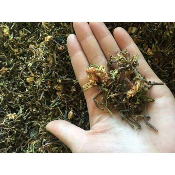 trà bát tiên và trà sơn mật (hồng sâm)