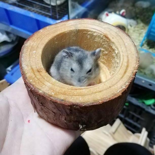 Chén ăn bằng Gỗ cho hamster .