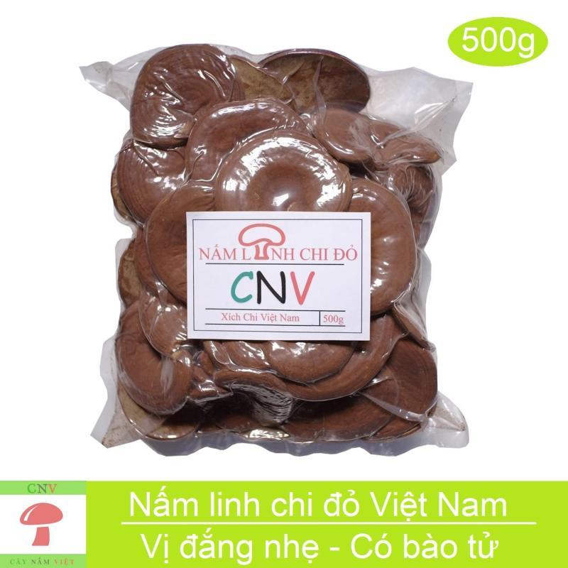 Nấm linh chi đỏ Việt Nam 500g (Xích chi vị đắng nhẹ) - Cây Nấm Việt cao cấp