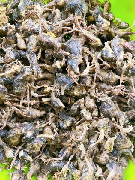 Chim cút sấy lạnh 50gr dành cho hamster/sóc /chó/mèo/nhím/dumbo