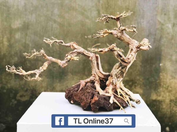 Lũa Bonsai bể cá D48xC42 - Xưởng TL Online37