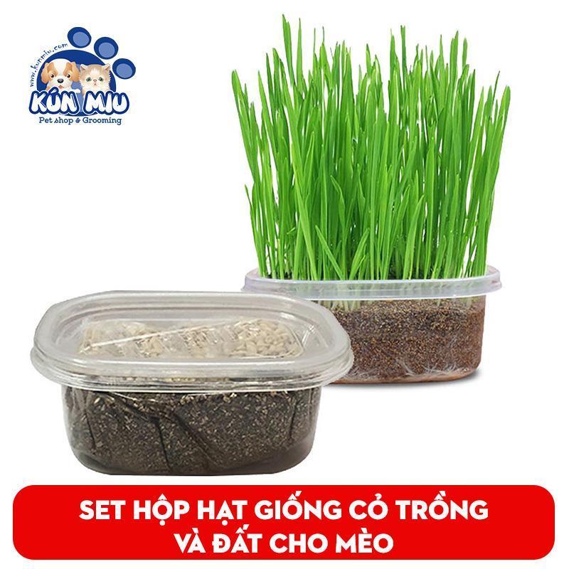 Set hộp hạt giống cỏ trồng và đất cho mèo - Set hạt giống cỏ Kún Miu