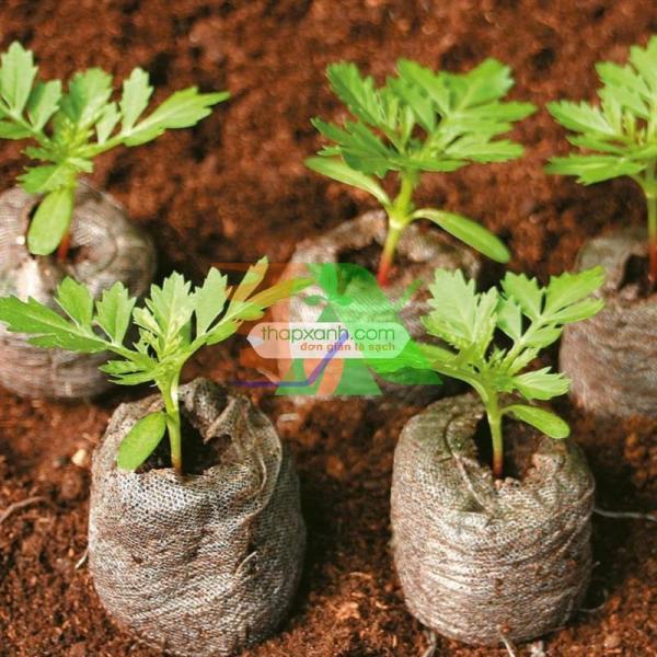 Hộp 200 Viên nén ươm hạt, viên nén xơ dừa