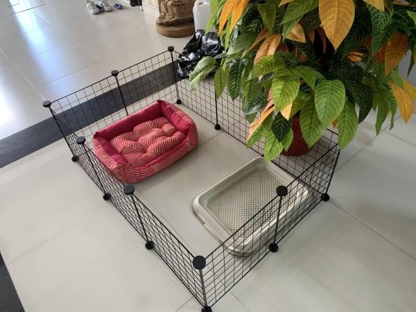 Combo 10 Tấm Lưới Quây Chuồng Chó Mèo, Chim Gà Tặng Kèm Chốt Nối Đa Năng