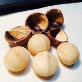 Mua Bộ 2 Goi Hạt Mắc Ca Macadamia Nứt Vỏ Uc 500G Australian Nguyên