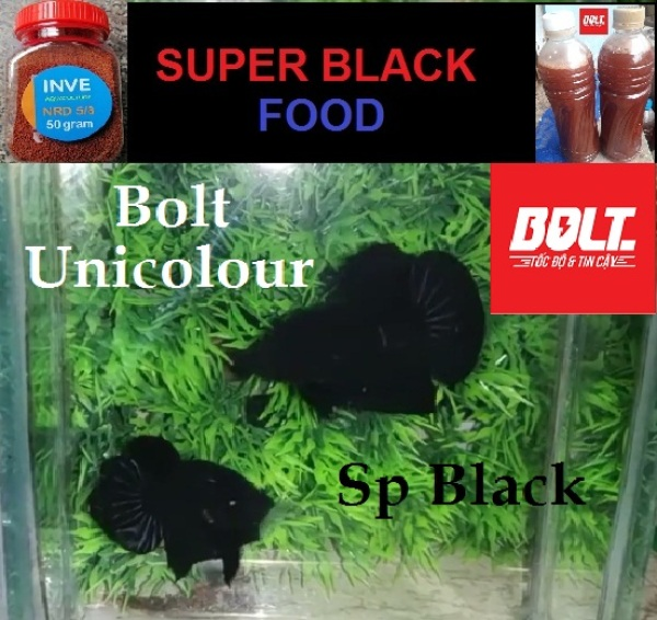Sản phẩm Phụ kiện : Combo 2 trống Super Black - Bolt Unicolour Betta