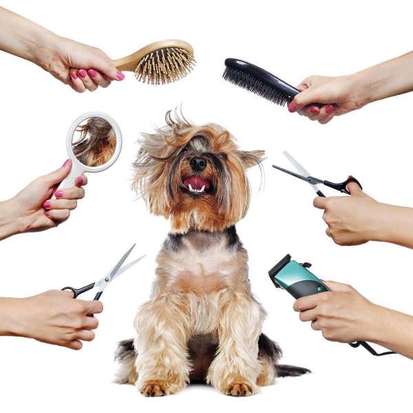 Hn - Dụng cụ cắt lông thú cưng - Dùng cắt tỉa lông chó mèo chuyên dụng chất liệu thép không gỉ / kéo cắt lông / Lược chải lông chó / Kéo cong / kéo thẳng / kéo tỉa / bộ kéo spa thú cưng / kéo chuyên dụng cắt lông chó mèo
