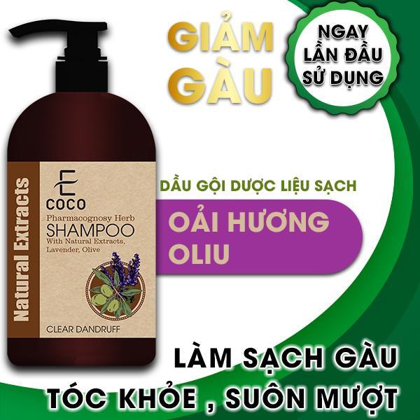 Dầu gội dược liệu sạch trị gàu Ecoco với chiết xuất tự nhiên, oải hương, ô liu
