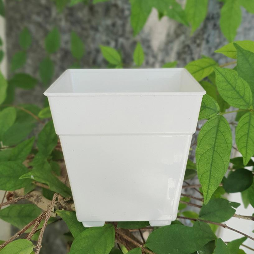 Combo 10 chậu vuông nhựa trắng 17x18cm