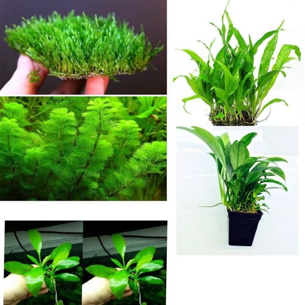 Combo 10 loại Cây thủy sinh dễ trồng - 10 loại cây thủy sinh cắt cắm