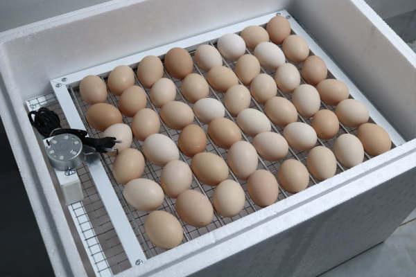 Khay đảo trứng nhôm thông minh có tích hợp hẹn giờ - Kênh chim cảnh