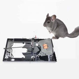Bẫy chuột bàn răng cưa thumbnail