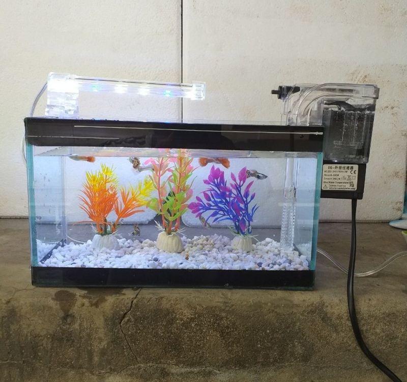 Set bể cá 24 cm với 6 món (bể, sỏi nền, máy lọc nước, men vi sinh, đèn led, 3 cây nhựa mini)