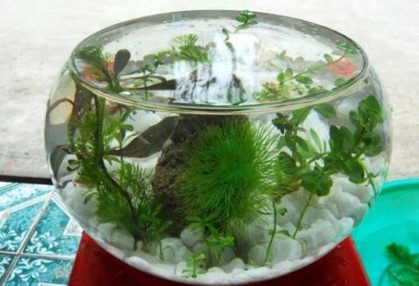 Bế cá thủy tinh hình tròn mini để bàn đường kính 25cm, cao 14cm+Tặng kèm chai lau giày, túi xách cực sạch