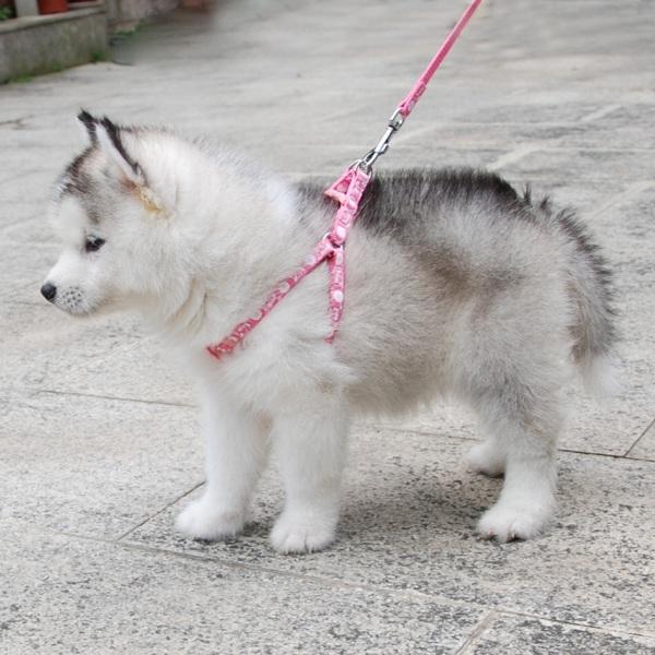 Dây dắt kèm yếm dành cho thú cưng, dây dắt kèm yếm sắc màu dành cho chó mèo LaLi Petfashion