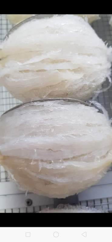 Yến tinh chế 100gr/ 1 hộp gồm 12 tổ đắp khuôn sấy khô, không tẩm đường, không pha tạp chất