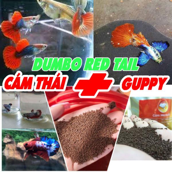 Phụ Kiện Thức Ăn Kèm 1 Cặp Guppy Dumbo Red Tail