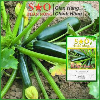 Hạt giống bí ngòi xanh F1 Sao thần nông tỉ lệ nảy mầm cao - Gói 5g thumbnail