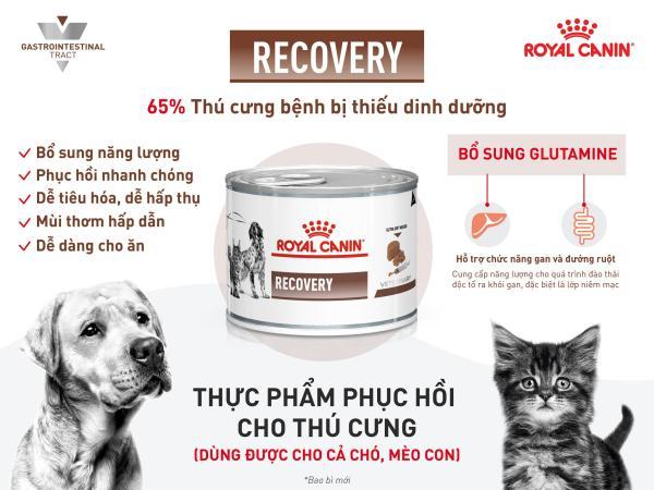 Pate recovery 195gr hãng Royal Canin ( phục hồi sức khỏe chó mèo)