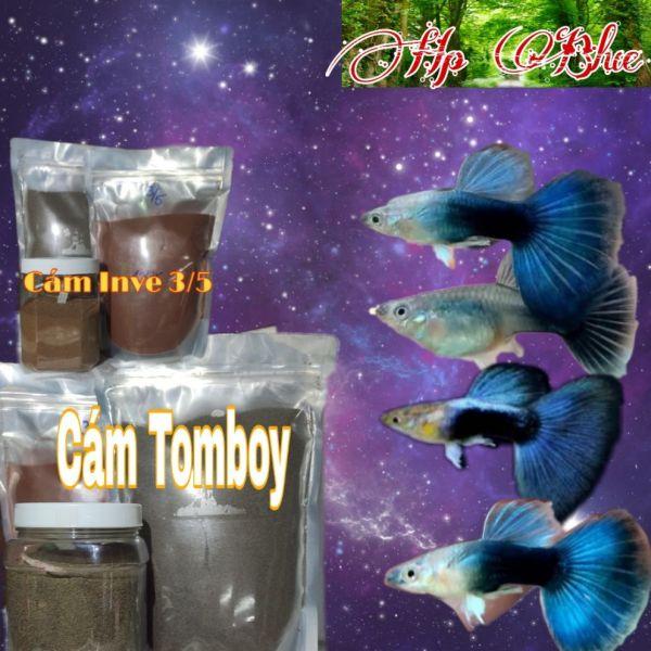 Guppy HB Blue gen Ribon | Bộ trang trí hồ cá | Tặng Hộp Sốp
