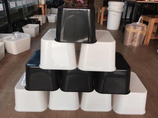 Combo 5 cái thùng khay chữ nhật 7 lít cho cá cảnh