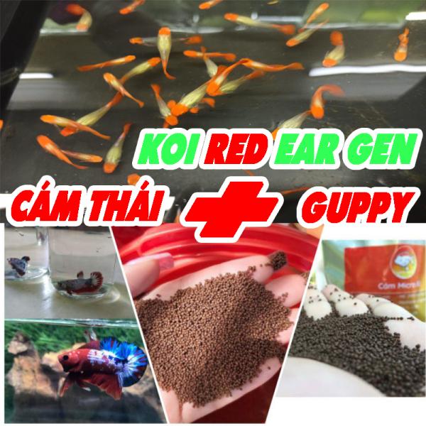 Phụ Kiện Thức Ăn Kèm 1 Cặp Guppy KOI RED AER GEN