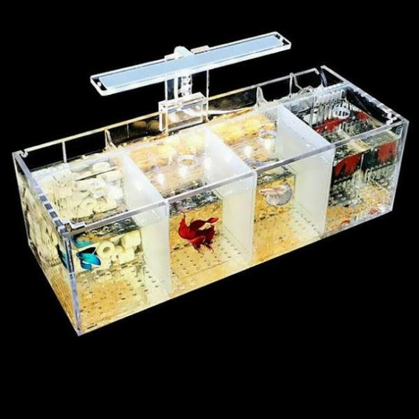 Hộp acrylic nuôi cá chọi betta 4 ngăn trong suốt