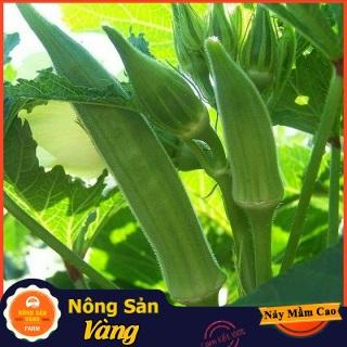 Hạt giống Đậu Bắp Cao Sản ( Gói 10 Gram ) - Nông Sản Vàng thumbnail