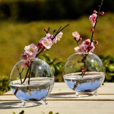 2 Pcs Clear Ball Glass Vase Bottle Terrarium Hydroponic Container Intl Nguyên