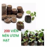 Bán Bộ 200 Vien Nen Ươm Hạt Vien Nen Xơ Dừa Có Thương Hiệu Nguyên