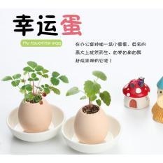Chậu cây quả trứng (dâu rừng)
