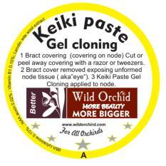 Hình ảnh Keiki paste nhân giống và tạo chồi phong lan quý hiếm Wild Orchid USA 3g