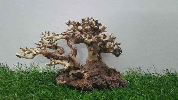 Lũa bonsai cấy rêu ôm đá(N 17- C10)