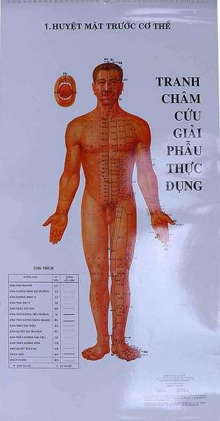 Sách Tranh Châm Cứu Giải Phẫu Thực Dụng - Newshop