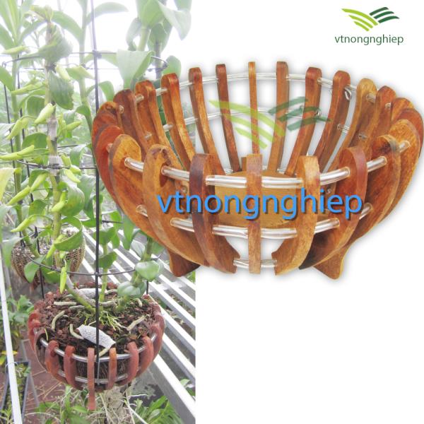 Chậu gỗ trồng lan phi 30, mẫu bí, gỗ căm xe, đường kính lọt lòng 30cm