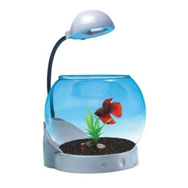 Bể Cá Mini Dạng Tròn Siêu Dễ Thương Jeneca TG-01 Bể cá mini kiêm đồng hồ để bàn