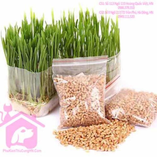 [Lấy mã giảm thêm 30%] Hạt giống cỏ mèo gói 20g bổ xung chất xơ và đẩy búi lông ra ngoài