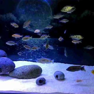 Cát Thạch Anh vật liệu lọc, trang trí bể cá, hồ thủy sinh (túi 200gr) 4