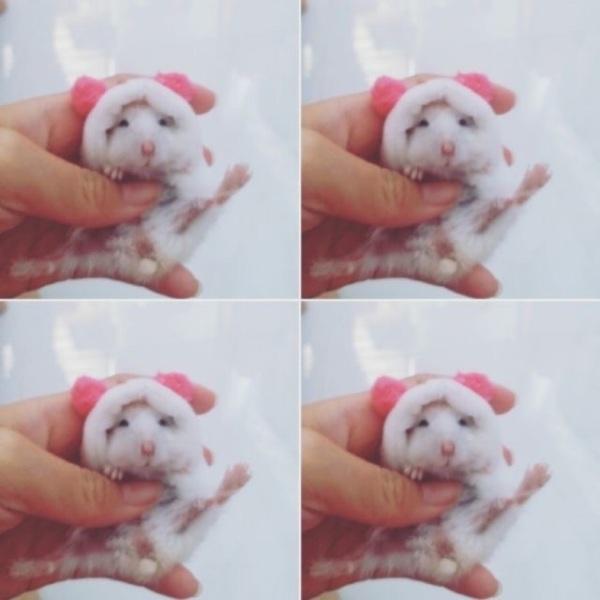 Áo choàng cho hamster (winter white, robo)