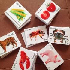 Hình ảnh Bộ 416 Thẻ học chữ Song Ngữ bằng hình ảnh kích thích trí thông minh cho bé + Tặng dụng lấy ráy tai có đèn