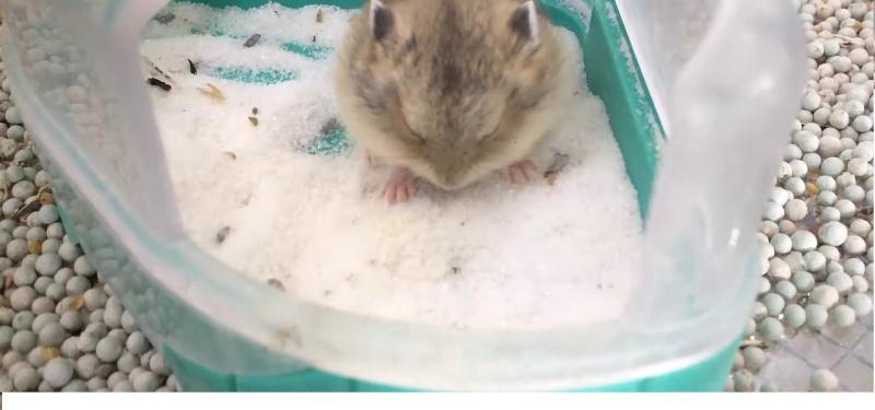 Bịch cát tắm hương hoa hồng cho hamster 1kg