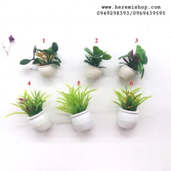 Mua Chậu cây hoa mini
