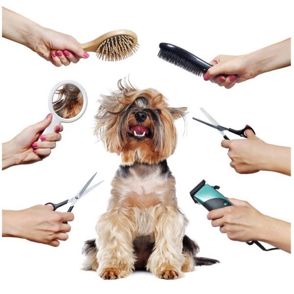 (lẻ 1 cái) Dụng cụ cắt lông thú cưng -Kéo tỉa lông chó mèo chuyên dụng - Lược chải lông chó ( Kéo cong / kéo thẳng / kéo tỉa / lược chải lông )