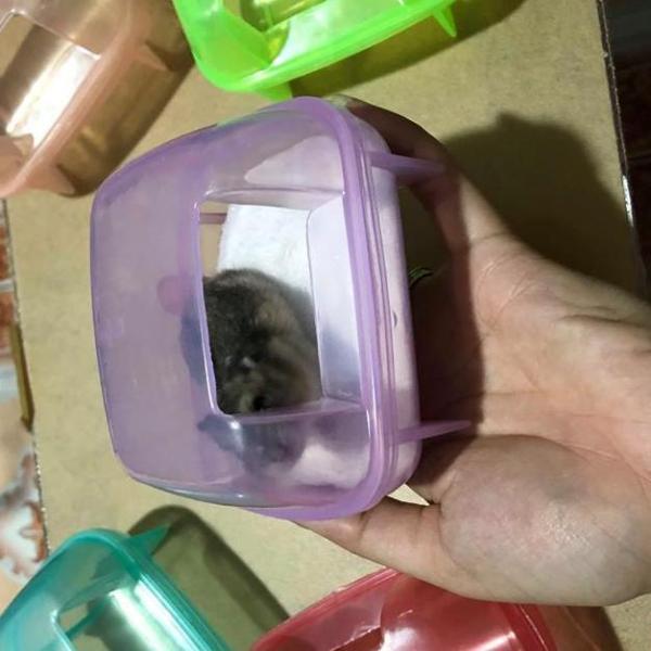 Nhà Tắm nhựa nhỏ cho chuột hamster.