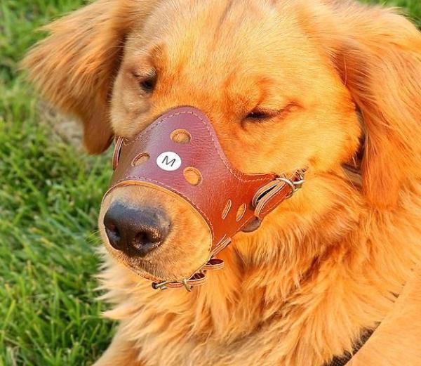 [HÀNG CÓ SẴN]- Rọ mõm chó bằng da mềm mại có các lổ và khe thông hơi- BỊt mỏ chó cưng