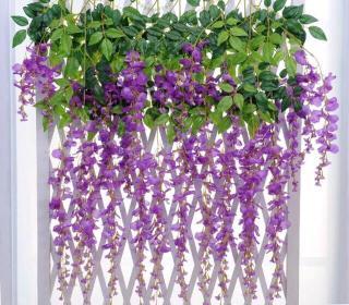 Combo 10 dây Hoa Fuji hoa tử đằng siêu đẹp-Hoa giả-Hoa lụa-Dây hoa-Hoa giả cao cấp-Hoa trang trí. Thiết kế đẹp mắt, giống thật, màu sắc tự nhiên. thumbnail