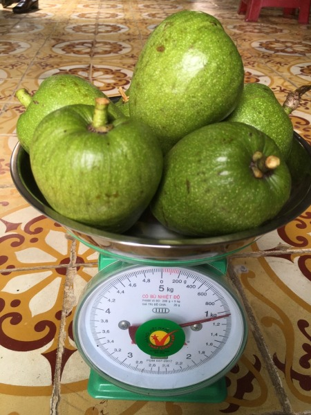 1 kg trái bình bát xanh ( kèm tài liệu sử dụng ) dùng để hỗ trợ trị bệnh bướu cổ cường giáp đau lưng nhức mỏi đau khớp giá rẻ